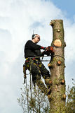 Woodcutter in action in a tree in denmark Stock Photos