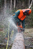 Woodcutter, chainsaw, tree Stock Image
