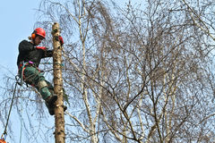 Woodcutter closeup in action in denmark Stock Image