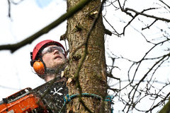 Woodcutter closeup in action in denmark Stock Photo