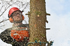 Woodcutter closeup in action in denmark Stock Images