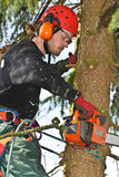 Woodcutter closeup in action in denmark Stock Photography