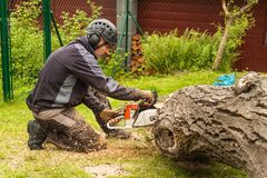 Woodcutter cuts the chain saw. Professional Lumberjack Cutting a big Tree in the garden. Stock Image