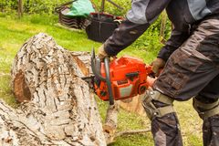 Woodcutter cuts the chain saw. Professional Lumberjack Cutting a big Tree in the garden. Stock Images
