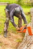 Woodcutter cuts the chain saw. Professional Lumberjack Cutting a big Tree in the garden. Royalty Free Stock Photo