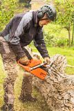 Woodcutter cuts the chain saw. Professional Lumberjack Cutting a big Tree in the garden. Stock Photos