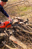 Woodcutter cutting broken tree Royalty Free Stock Photo