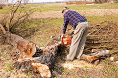 Woodcutter cutting broken tree Stock Photos