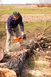 Woodcutter cutting broken tree Royalty Free Stock Image