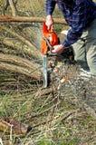Woodcutter cutting broken tree Stock Photos