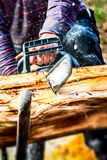 Woodcutter cutting a tree with a chainsaw Royalty Free Stock Image