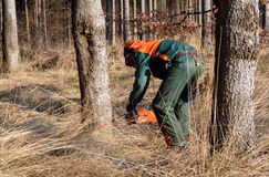 Woodcutter cutting tree down Royalty Free Stock Images
