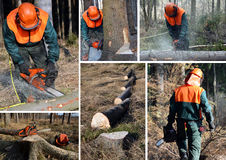 Woodcutter, insieme del lavoro della foresta Fotografie Stock Libere da Diritti