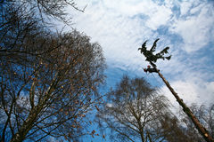 Woodcutter silhouette on the top of a tree in action in denmark Royalty Free Stock Photography
