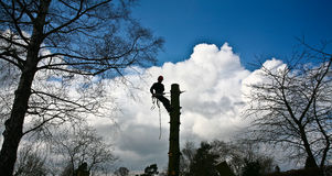 Woodcutter silhouette on the top of a tree in action in denmark Stock Image