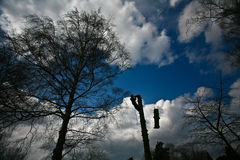 Woodcutter silhouette on the top of a tree in action in denmark Stock Photography