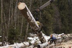 Woodcutter using a chain saw to cut the tree trunk into logs Royalty Free Stock Photography