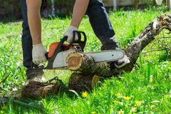 Sawing chainsaw tree. Woodcutter using a chainsaw to cut a tree royalty free stock photos