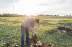 Woodcutter at work. Lumberman cuts wood with his strong axe Royalty Free Stock Image