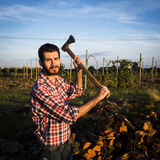 Woodcutter at work. Lumberman cuts wood with his strong axe Stock Images