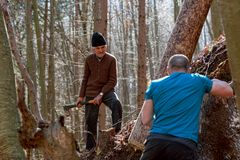 Woodcutters working Royalty Free Stock Photos