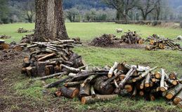 Woodcutting, forestry, logs in piles Stock Photography