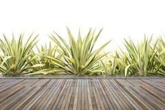 Woodecking eller durk och växt i trädgårds- dekorativt Royaltyfria Foton