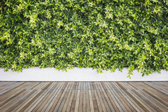 Woodecking or flooring and plant in garden decorative Royalty Free Stock Images