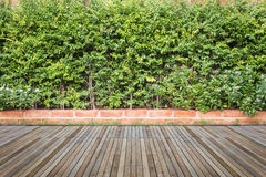 Woodecking or flooring and plant in garden decorative Royalty Free Stock Photography