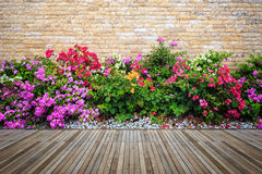 Woodecking or flooring and plant in garden decorative Royalty Free Stock Photo