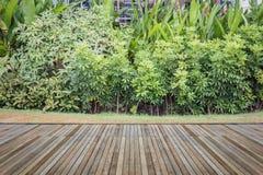 Woodecking o suelo y planta en el jardín decorativo foto de archivo libre de regalías