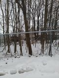 Wooded area behind chain linked fence with snowballs and snow. royalty free stock photos