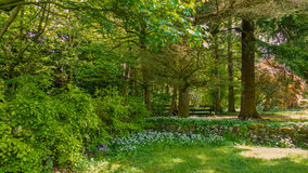 Wooded area within a country park. With flowers in the shade of large trees royalty free stock photography