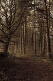 Wooded area in harrogate Royalty Free Stock Photography