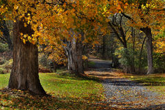 Wooded Autumn Path. A path lined with large trees with colorful Autumn foliage Stock Photos
