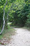 Wooded Beach Trail at Gardiners Bay New York Stock Photos