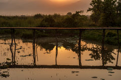 Wooded bridge in the lake sunrise. Royalty Free Stock Image