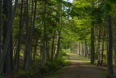 Wooded Evening Light Royalty Free Stock Image