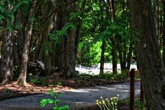 Wooded forest path on Mackinaw Island with yellow flowers on forest floor stock photography