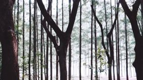 Beautiful forest with fog. Wooded forest trees backlit by sunlight before sunset with sun rays pouring through trees on forest floor illuminating tree branches stock video footage