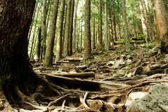 Wooded Hiking Trail. This image was shot on Grouse Mountain in North Vancouver Canada Stock Images