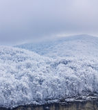 Wooded hill covered with snow Stock Photography
