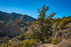 Wooded Hills in Mojave Desert. Green wooded hills in the mountains surrounding the mojave Desert stock photography