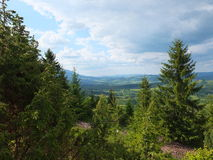 Wooded hillside Carpathians. Young forest on the mountain slopes stock photo
