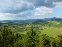 Wooded hillside Carpathians. Young forest on the mountain slopes royalty free stock photo