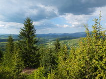 Wooded hillside Carpathians. Young forest on the mountain slopes stock photography