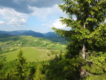 Wooded hillside Carpathians. Young forest on the mountain slopes stock photos