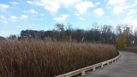 Wooded Marsh Stock Photography