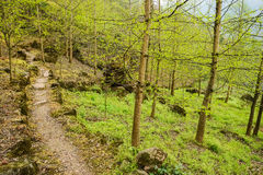 Wooded mountainside footpath in verdant spring Stock Photos