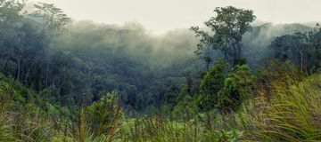 Wooded mountainside in a low lying cloud royalty free stock photo